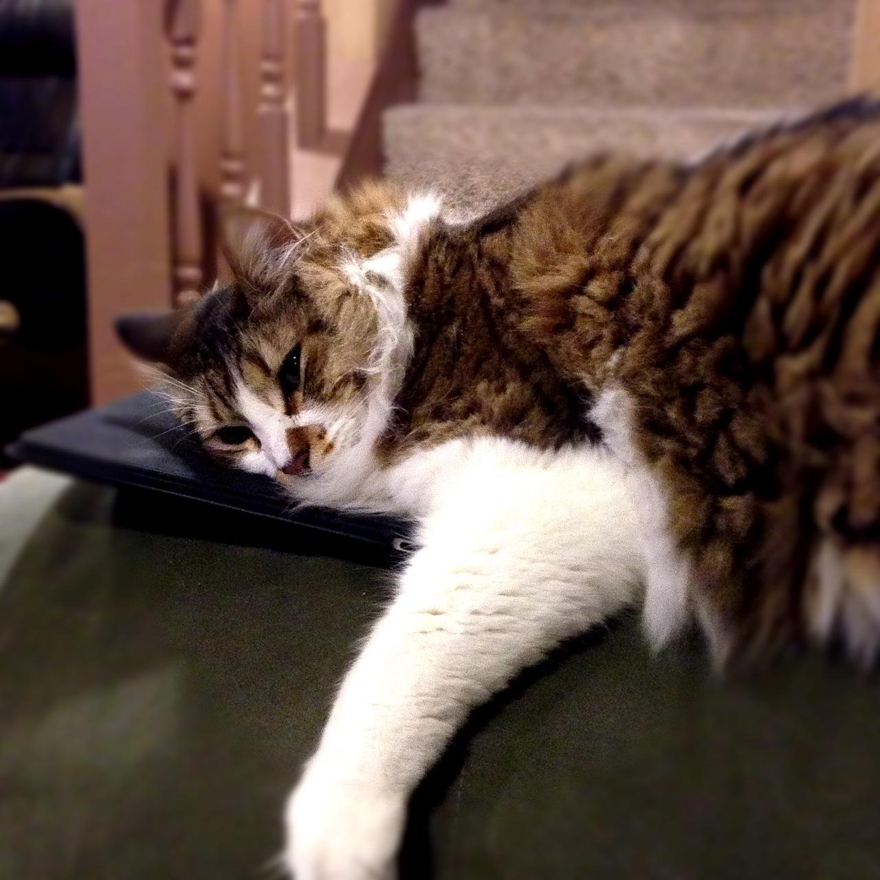 Ipad Animal Pillow : iPad Cat Pillow